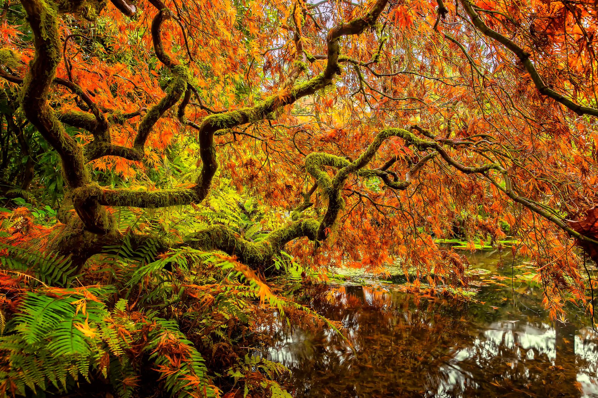 Kubota Gardens in Seattle in Autumn HD Wallpaper | Background Image ...