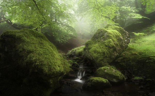 Earth Stream Nature Rock Fog Moss HD Wallpaper | Background Image