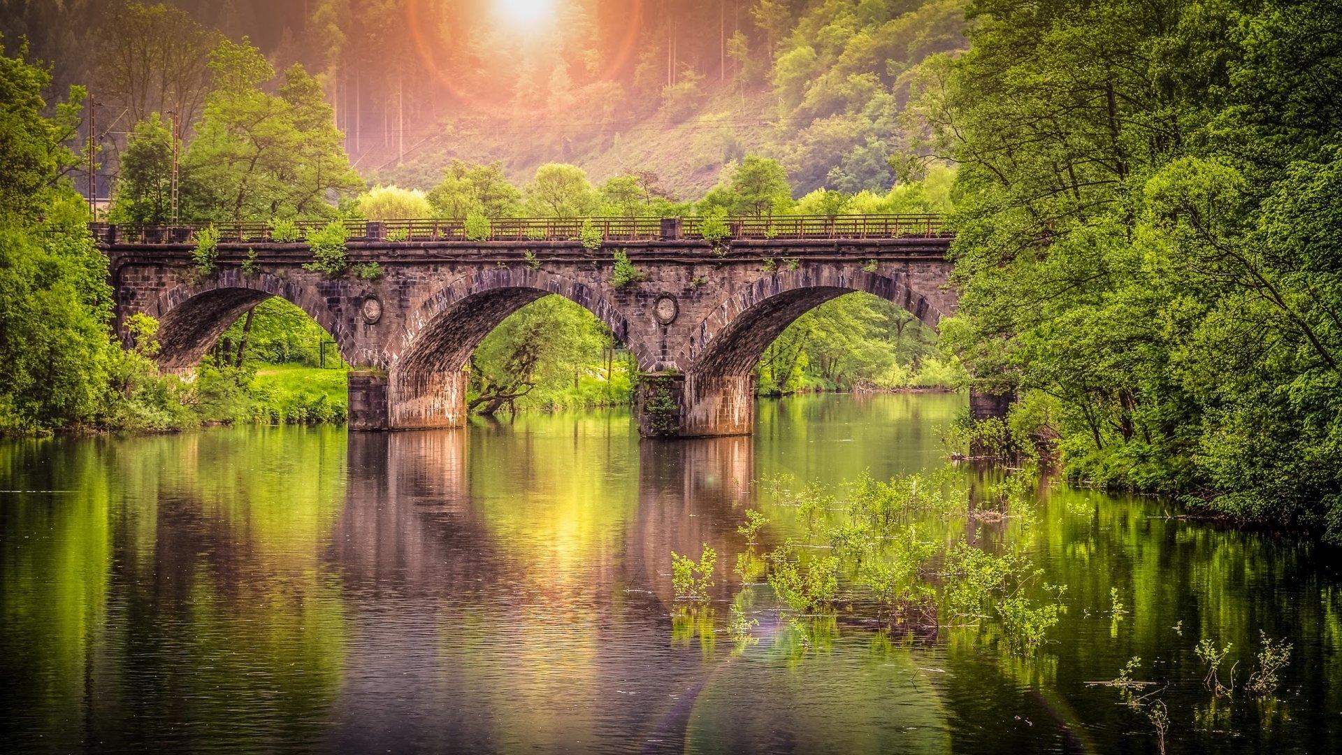 Forest Bridge Hd Wallpaper Background Image 2560x1440