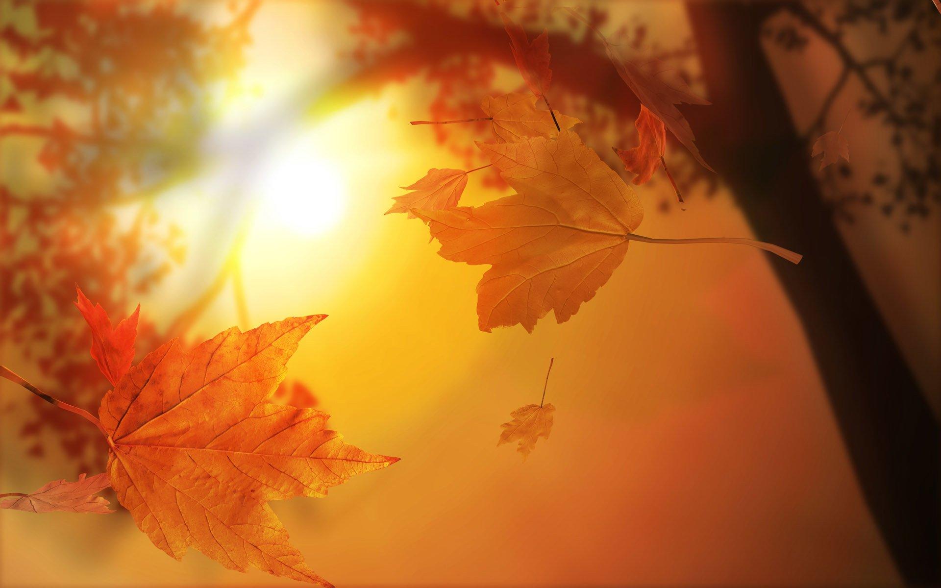 Earth - Fall  Leaf Season Earth Wallpaper