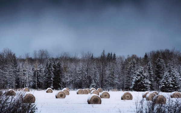Earth Winter Nature Forest Tree Snow Haystack HD Wallpaper   Background Image