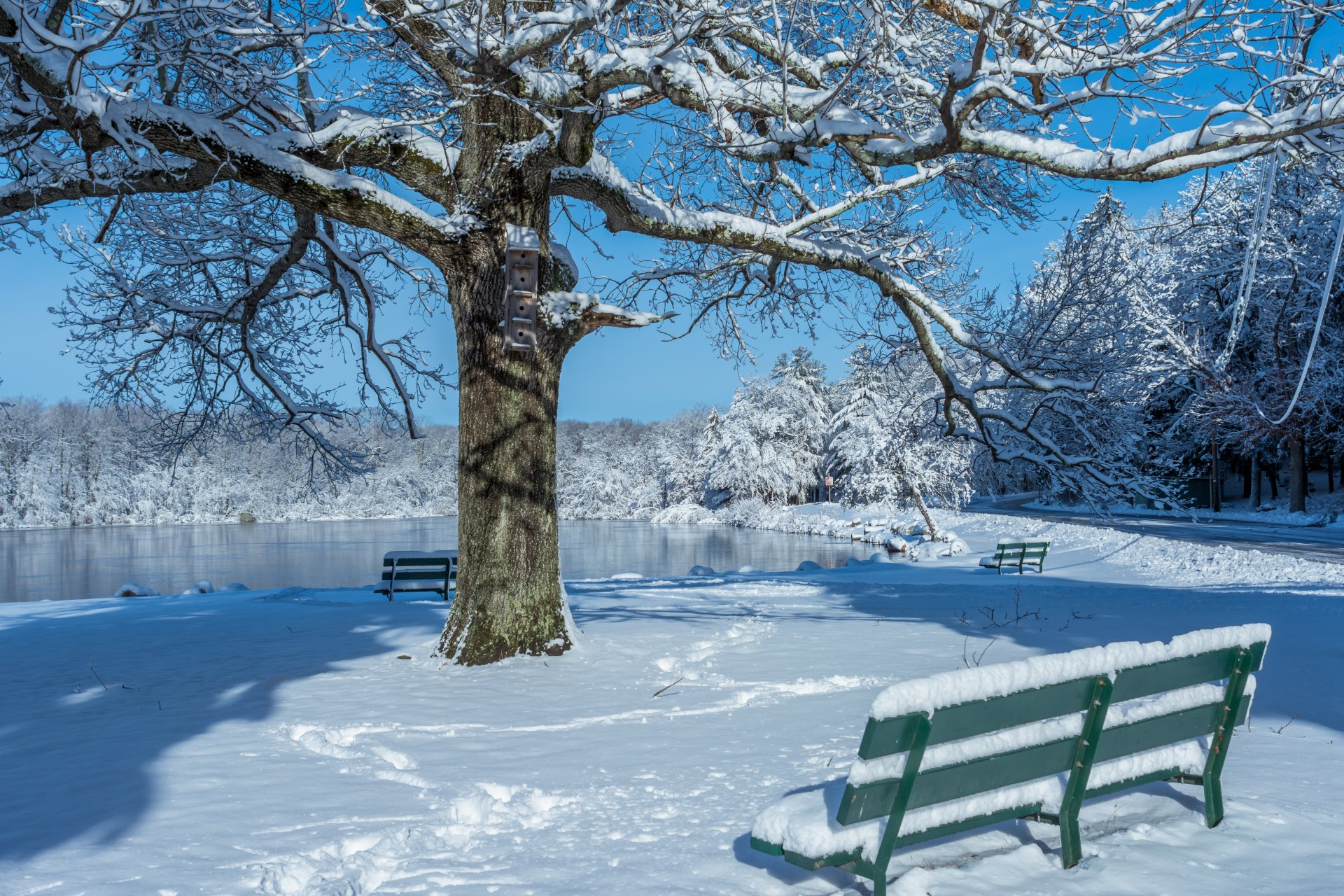 Photography - Winter  Snow Pond Bench Tree Park Earth Wallpaper