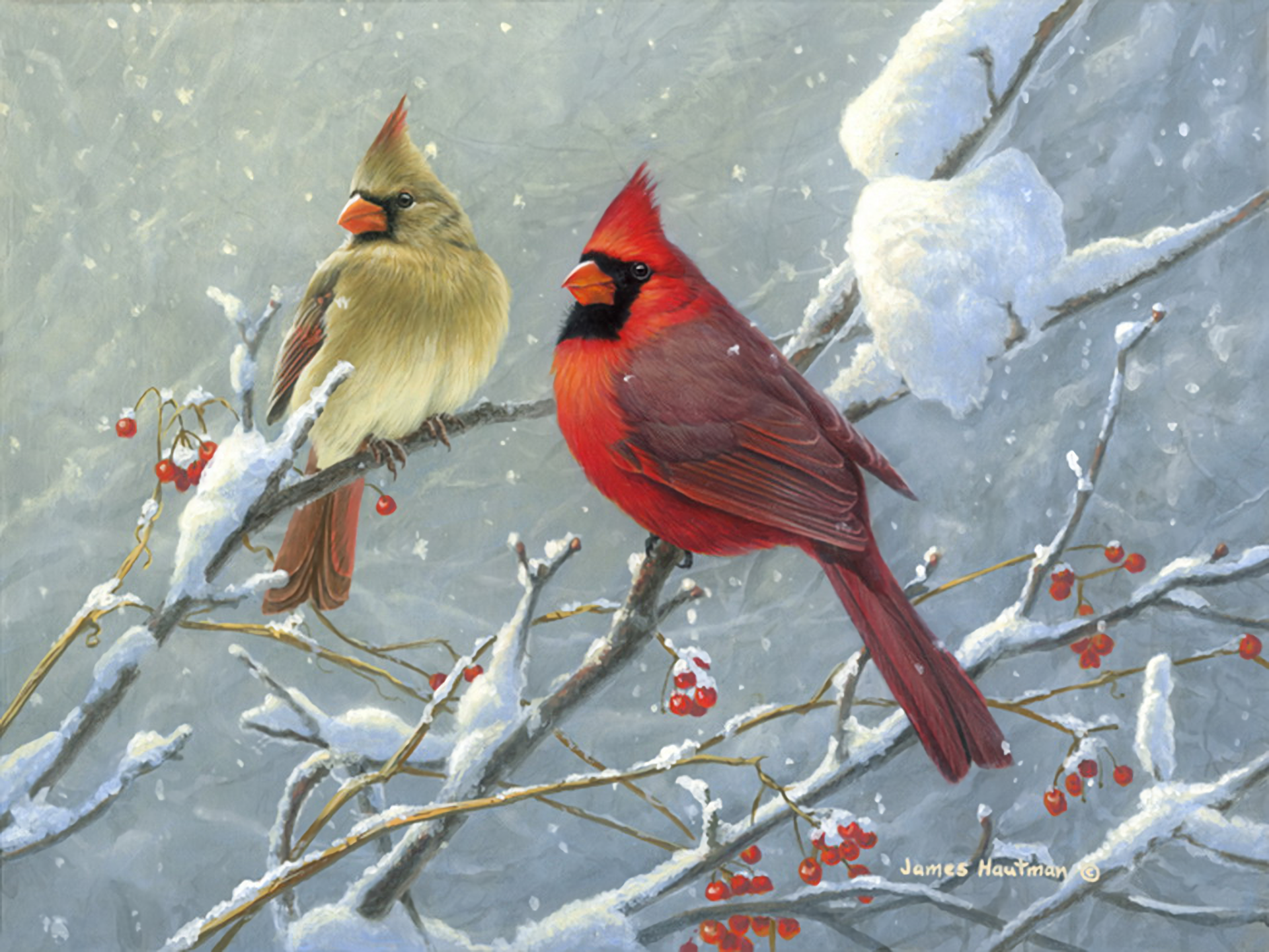 Cardinals on winter branch hd wallpaper background image - Pictures of cardinals in snow ...