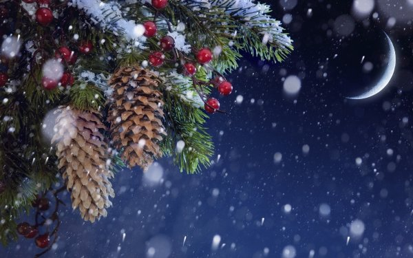 Holiday Christmas Berry Pine Cone Branch Snowfall Moon HD Wallpaper   Background Image