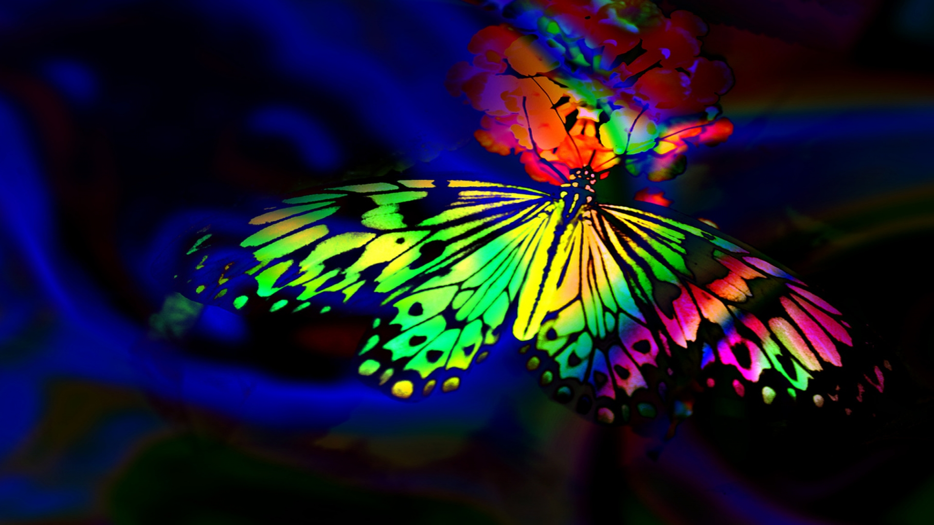 Butterfly HD Wallpaper | Background Image | 1920x1080 | ID ...