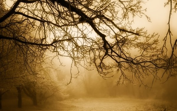 Earth Winter Sunrise Tree Nature Snow Branch Fog HD Wallpaper | Background Image
