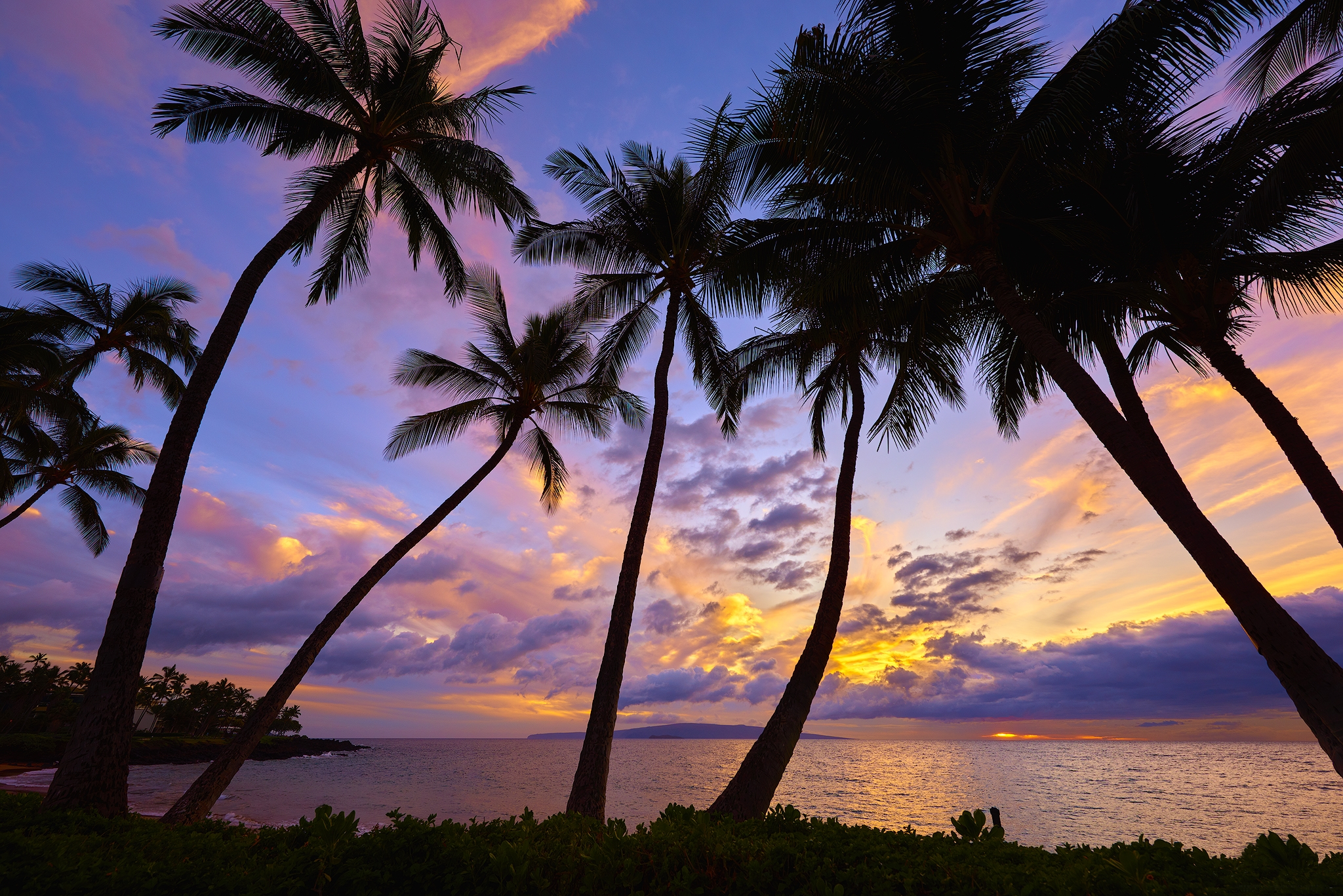 palm trees in the sunset hd wallpaper background image