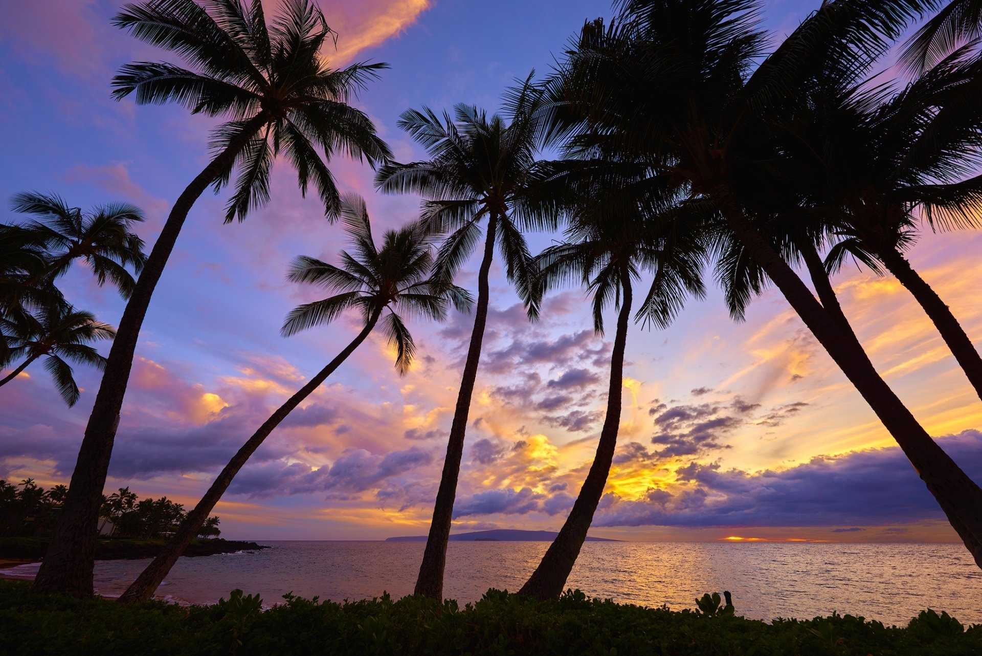 Palm Trees In The Sunset HD Wallpaper