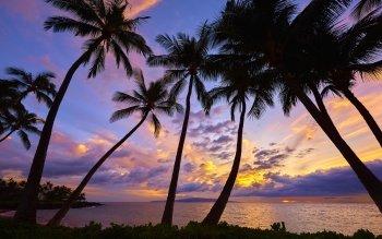 palmier fond ecran