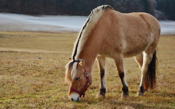 Animal Horse Pony HD Wallpaper | Background Image