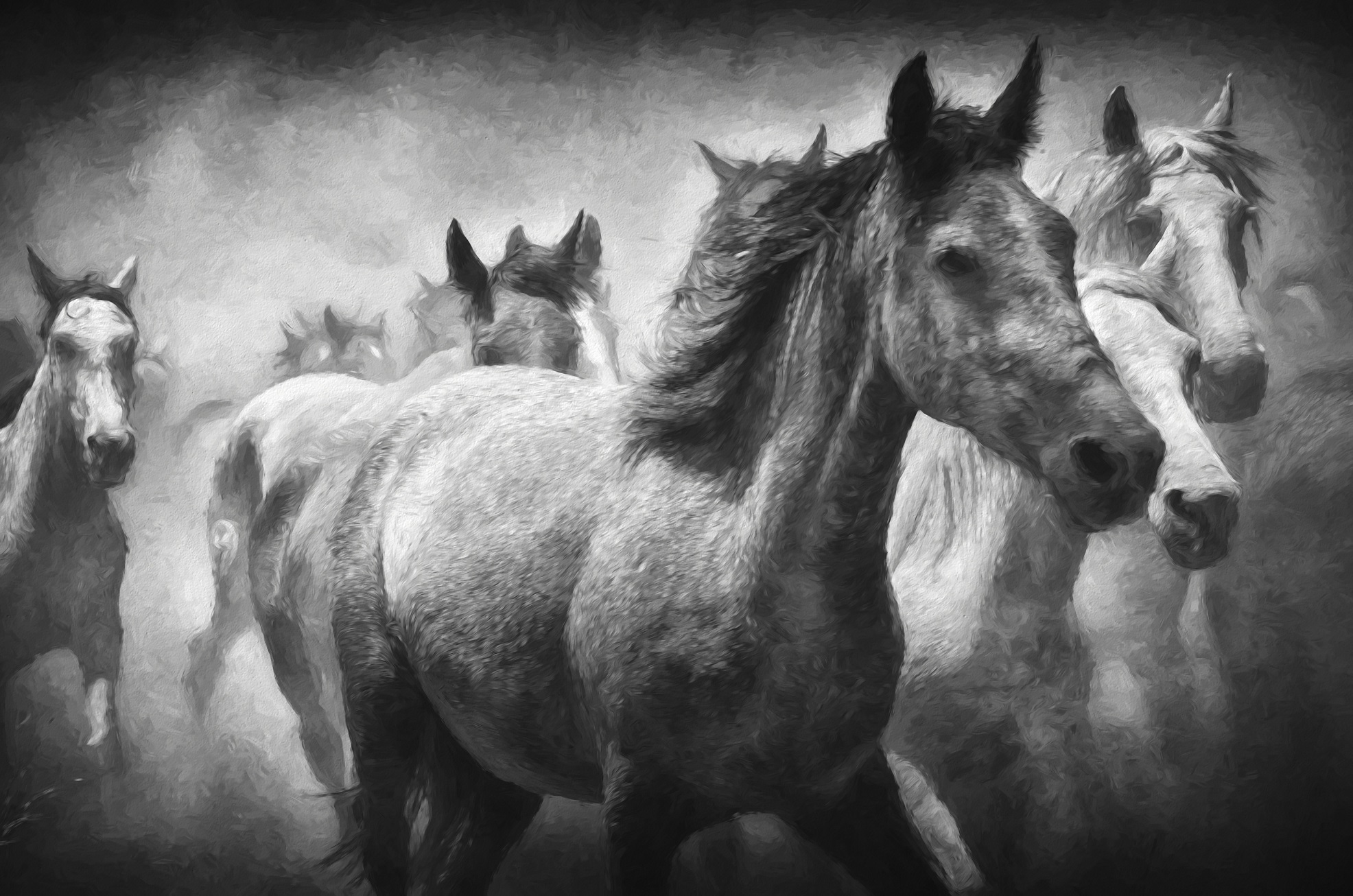 Mob Of Horses Running Hd Wallpaper Hintergrund 1972x1306 Id
