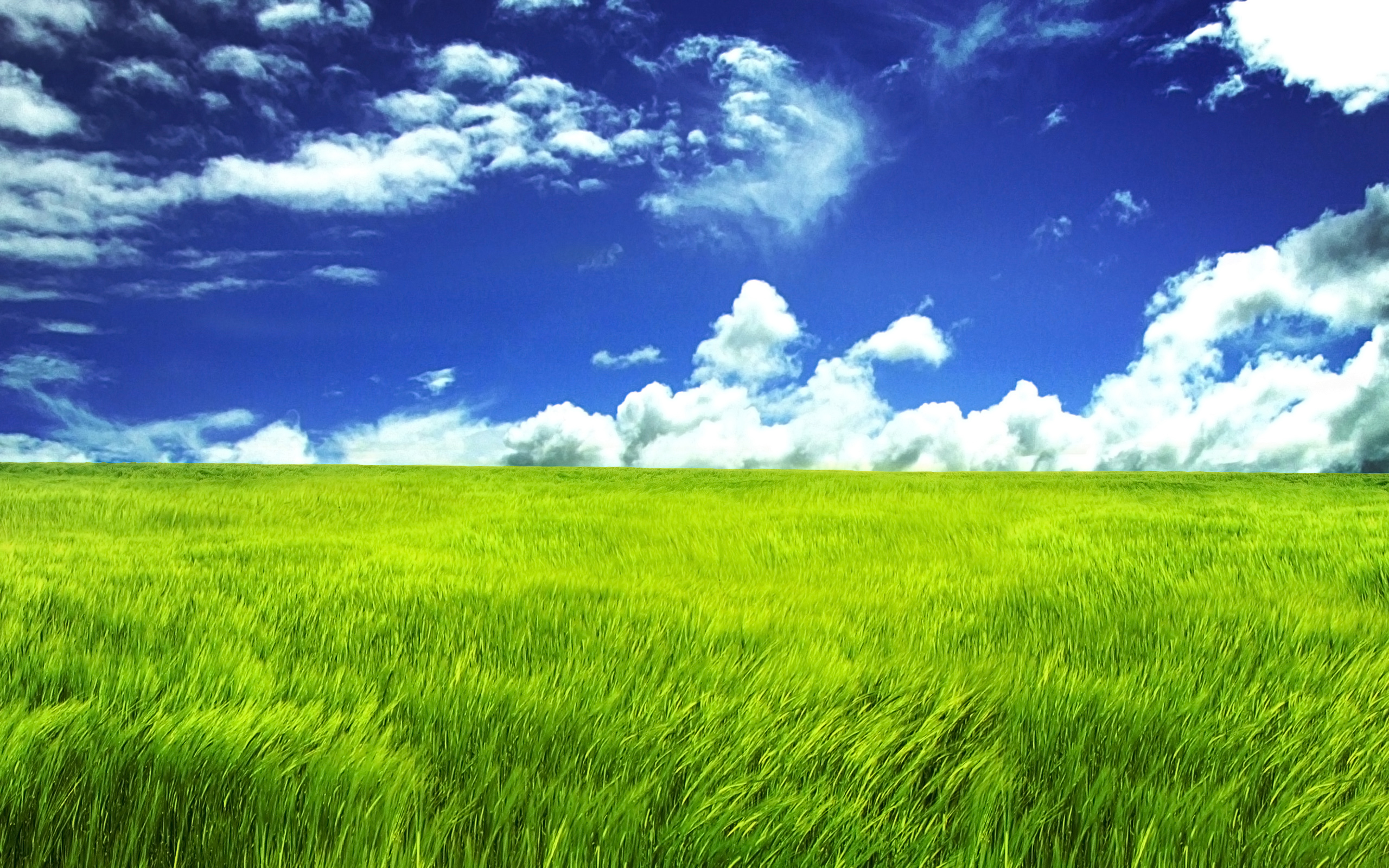 Grass Full HD Wallpaper and Background | 2560x1600 | ID:79381