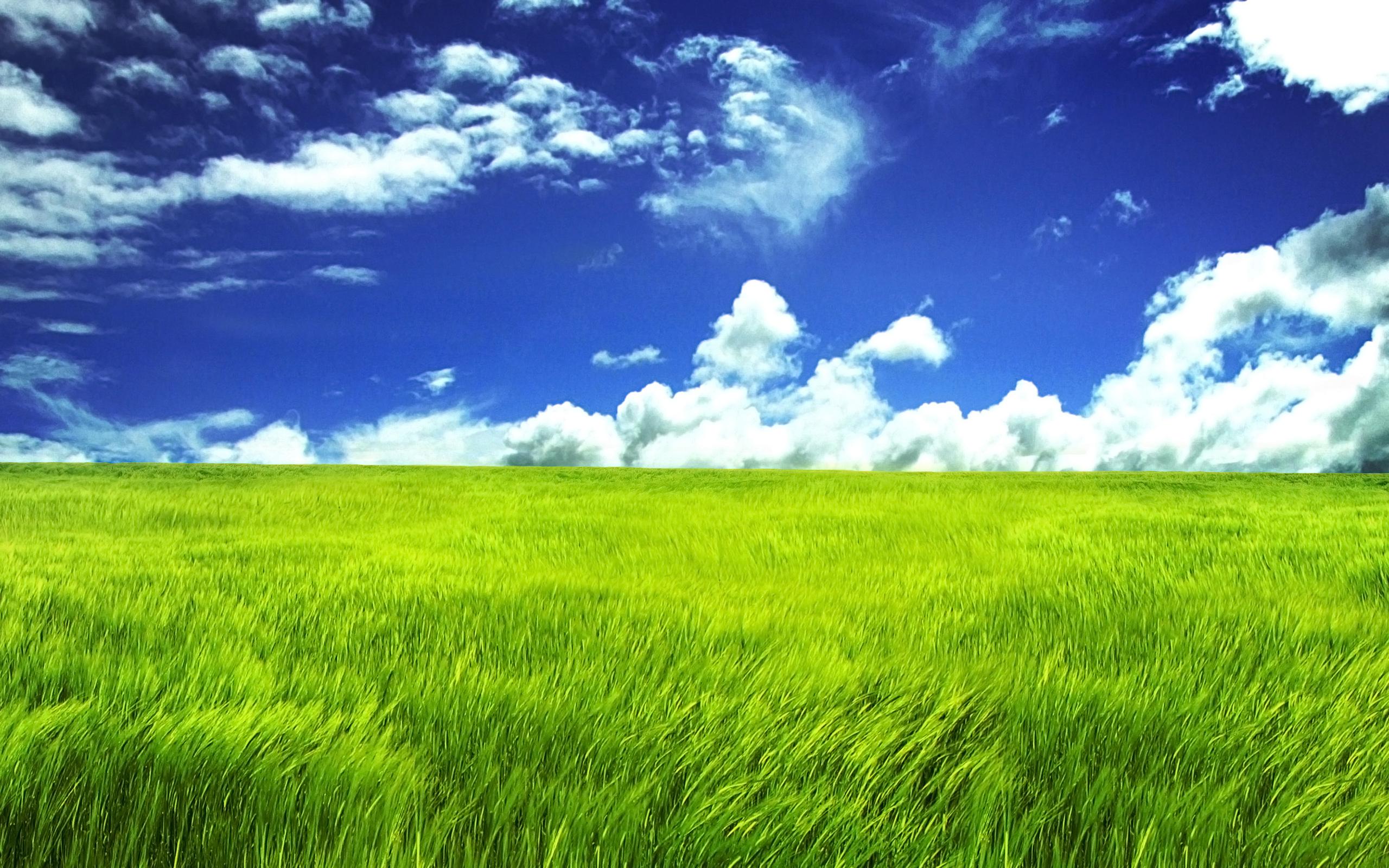 Greengrass Field