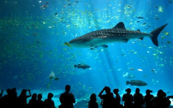 Animalia - Shark Wallpapers and Backgrounds ID : 79333