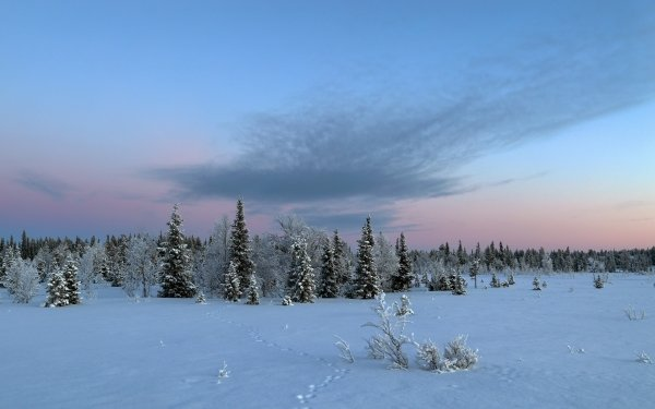 Earth Winter Tracks Snow Nature Sky Forest HD Wallpaper   Background Image
