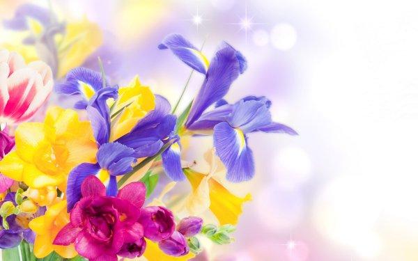Man Made Flower Bouquet Blue Flower Yellow Flower Pink Flower Iris HD Wallpaper   Background Image