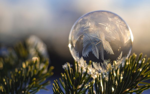 Earth Winter Nature Close-Up Frost Bubble HD Wallpaper | Background Image