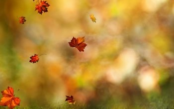 HD Wallpaper | Background Image ID:820862