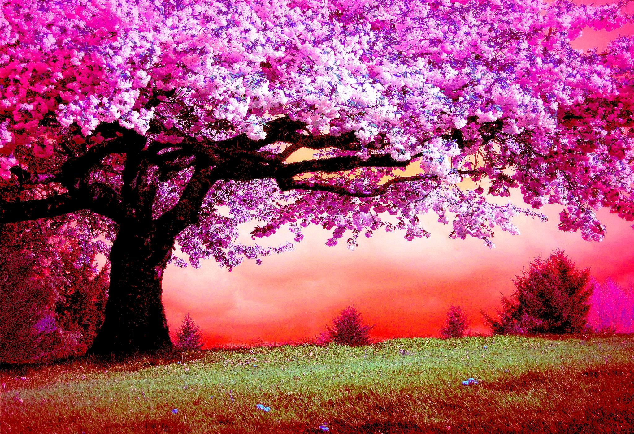 Pink Trees HD Wallpaper | Background Image | 2048x1403 | ID:822996 ...