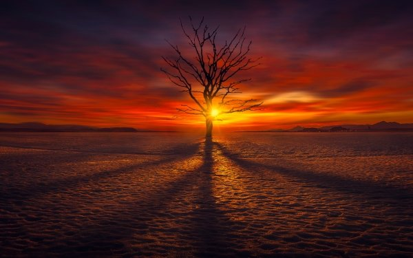 Earth Tree Trees Nature Lonely Tree Sunset Horizon Snow Winter HD Wallpaper   Background Image