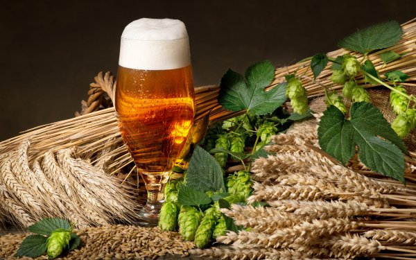 Food Beer Glass Alcohol Drink Still Life Plant Hop HD Wallpaper | Background Image
