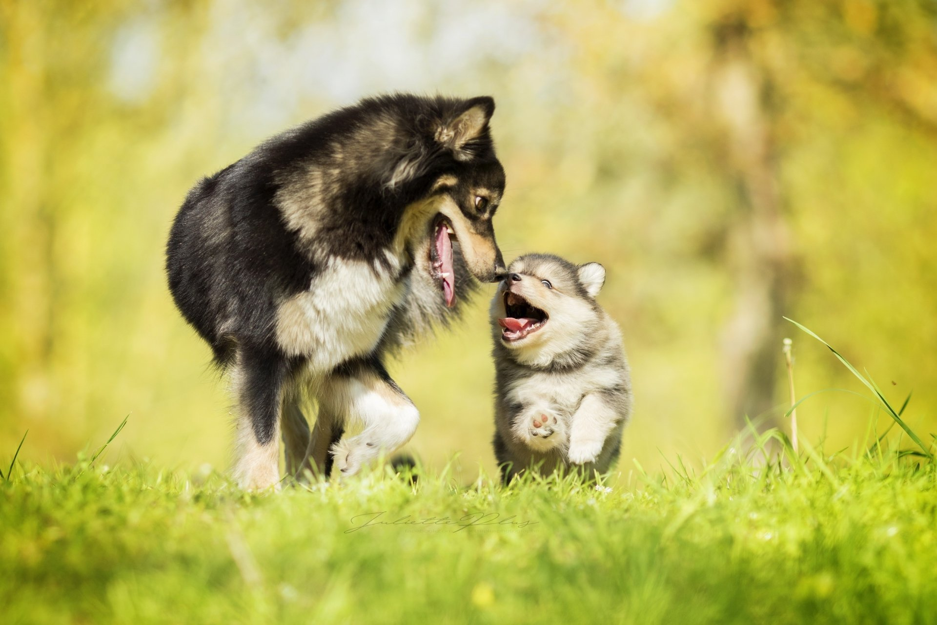 Animal - Dog  Love Baby Animal Puppy Grass Depth Of Field Wallpaper