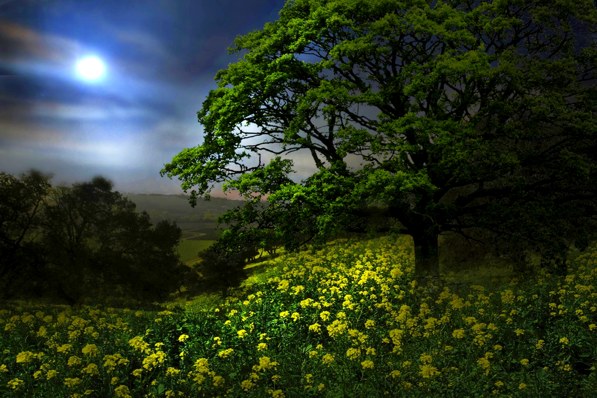 night in spring meadow full hd wallpaper and background