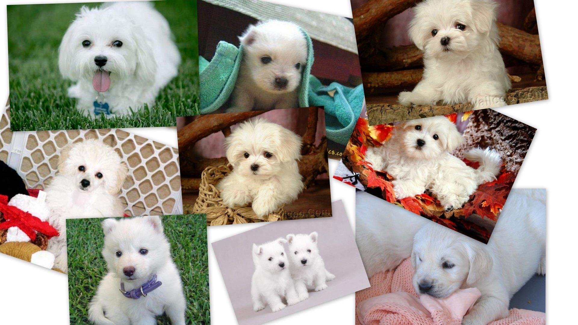 Animal - Dog  Wallpaper