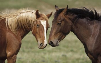 Animal - Horse Wallpapers and Backgrounds ID : 84783