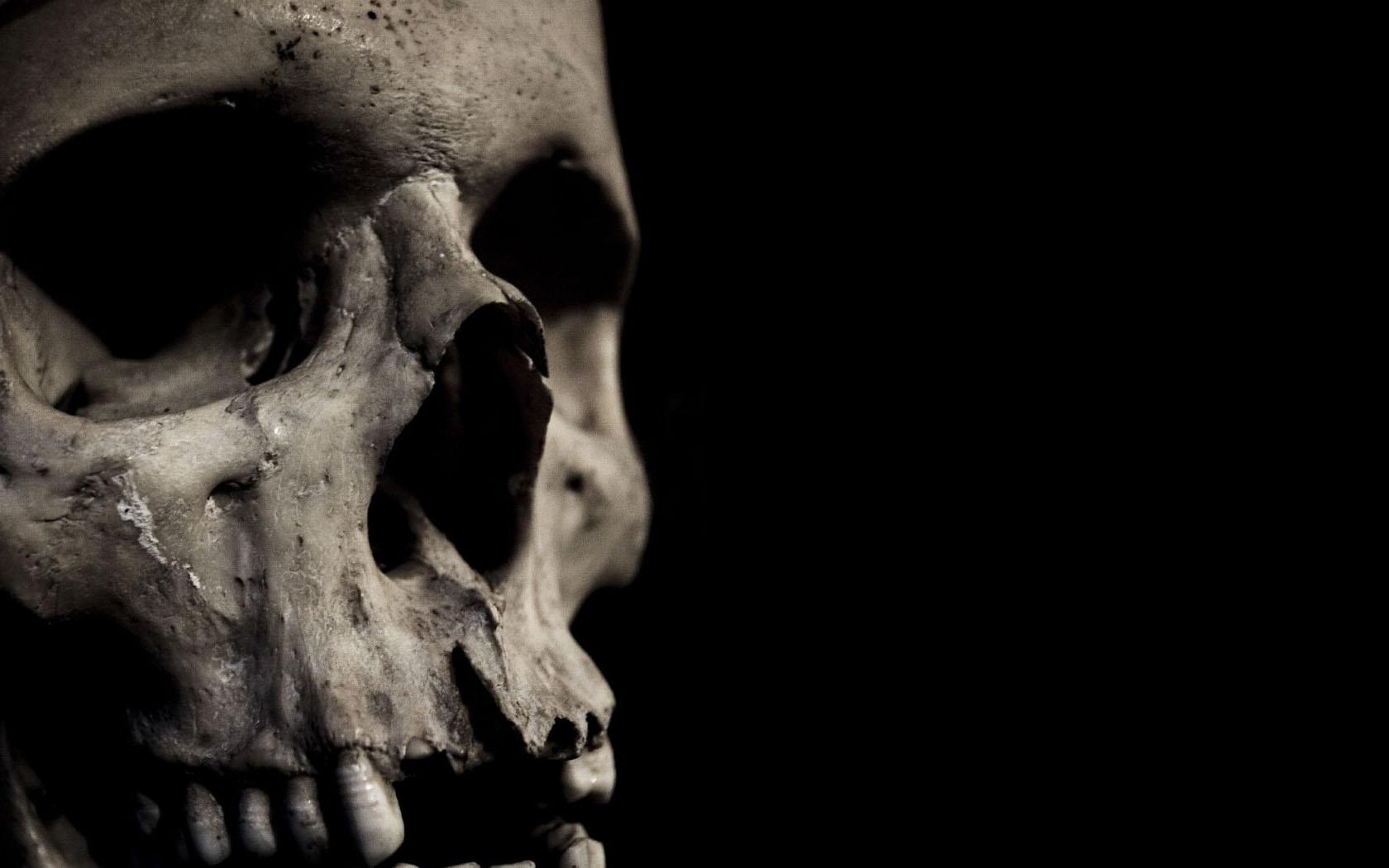 Skull Wallpaper And Background Image