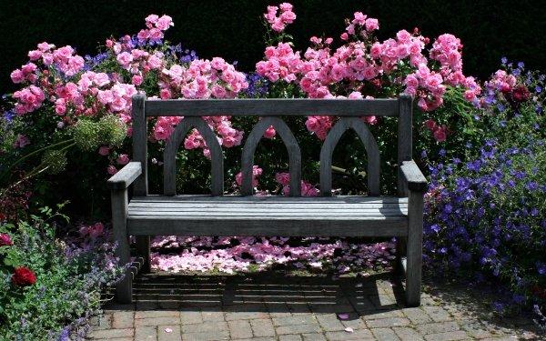Man Made Bench Garden English Garden Rose Bush Flower Colorful Pink Flower Rose Bush HD Wallpaper | Background Image