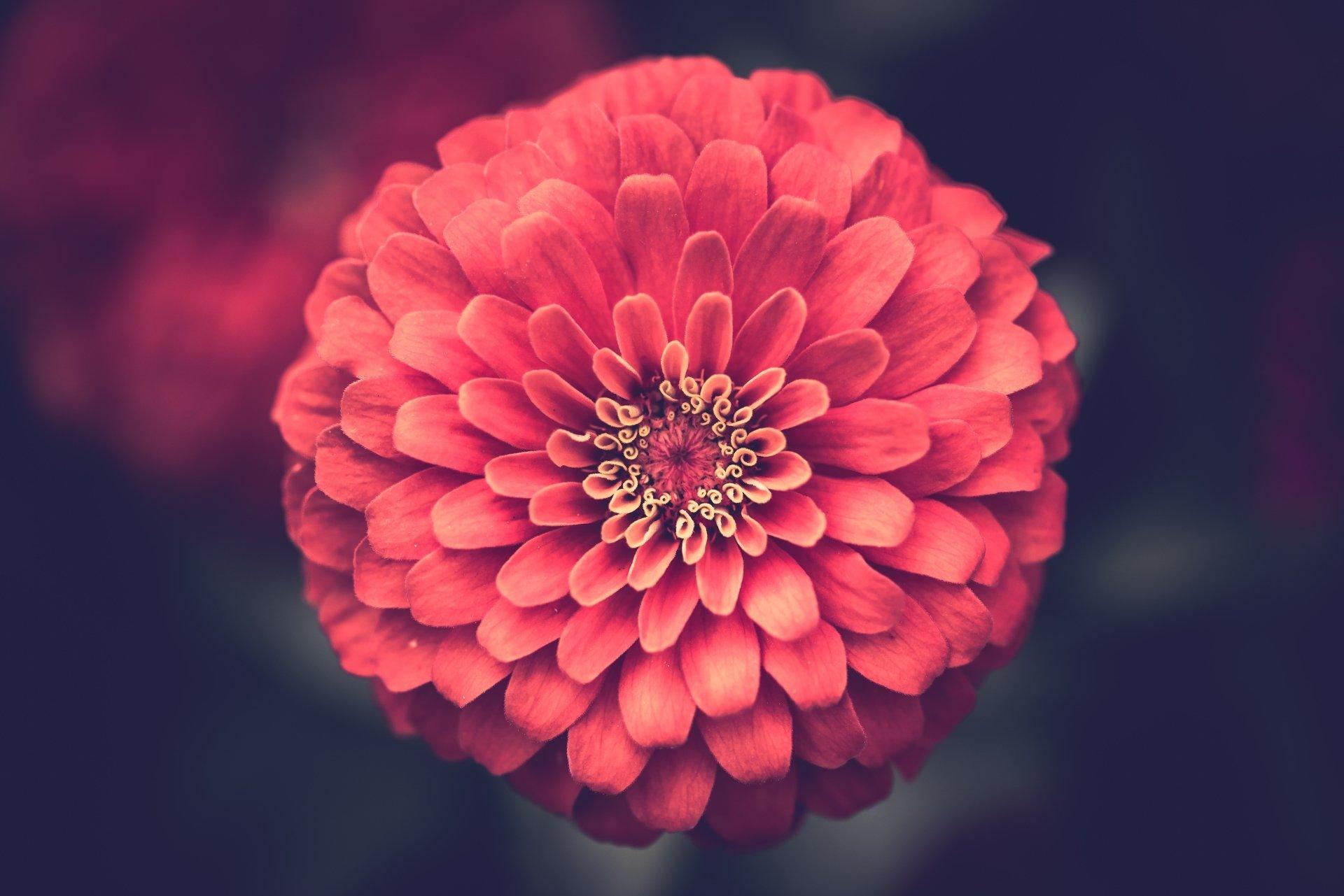 Earth - Flower  Macro Pink Flower Wallpaper
