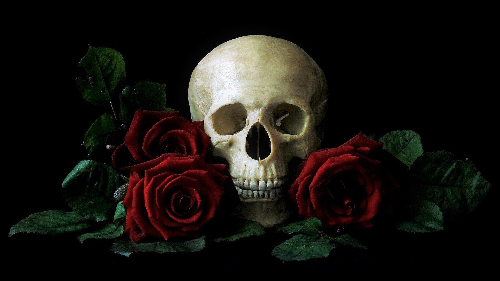 Skull And Roses Fondo De Pantalla Hd Fondo De Escritorio