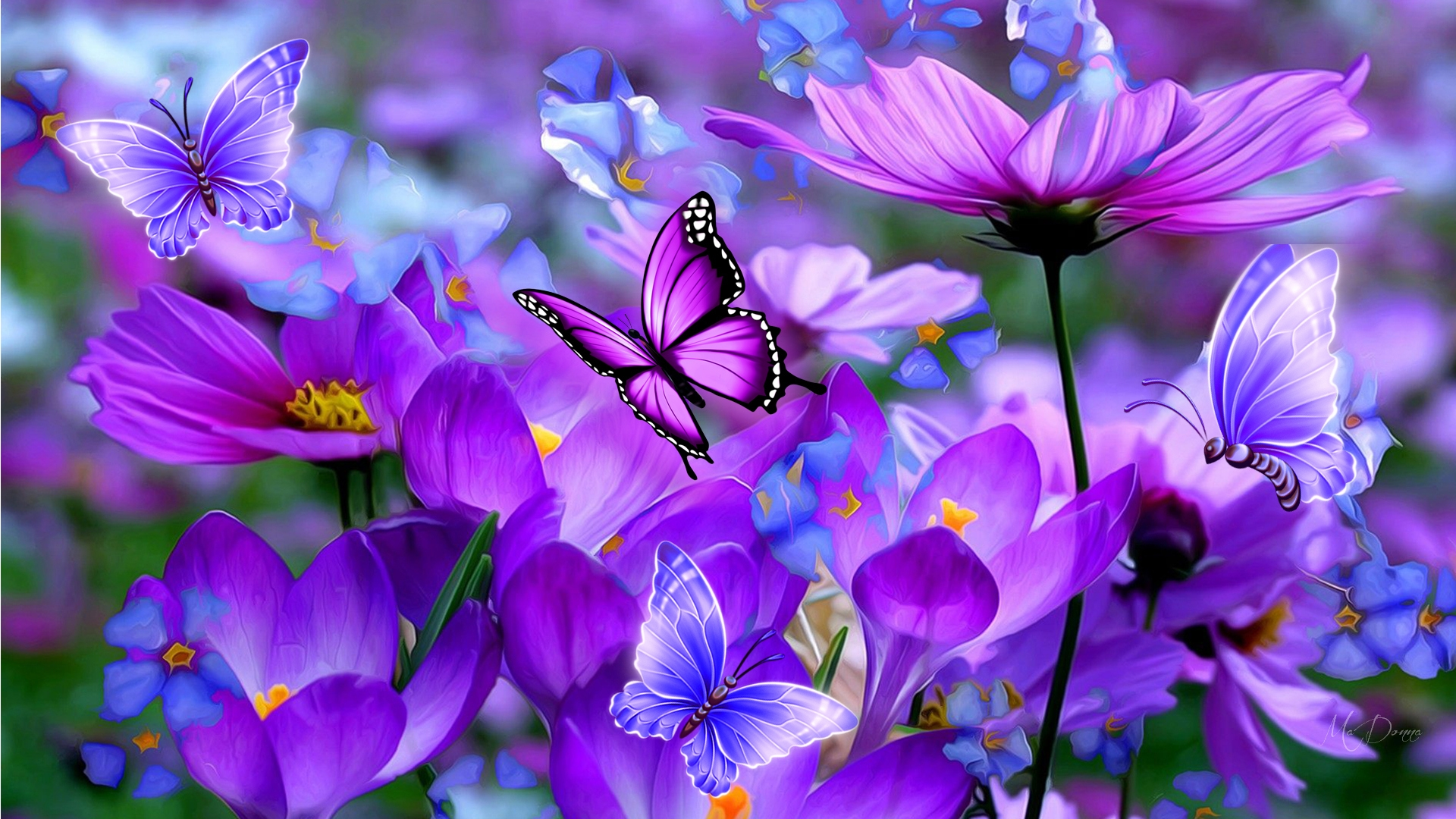 Purple Cosmos and Butterflies HD Wallpaper   Background ...