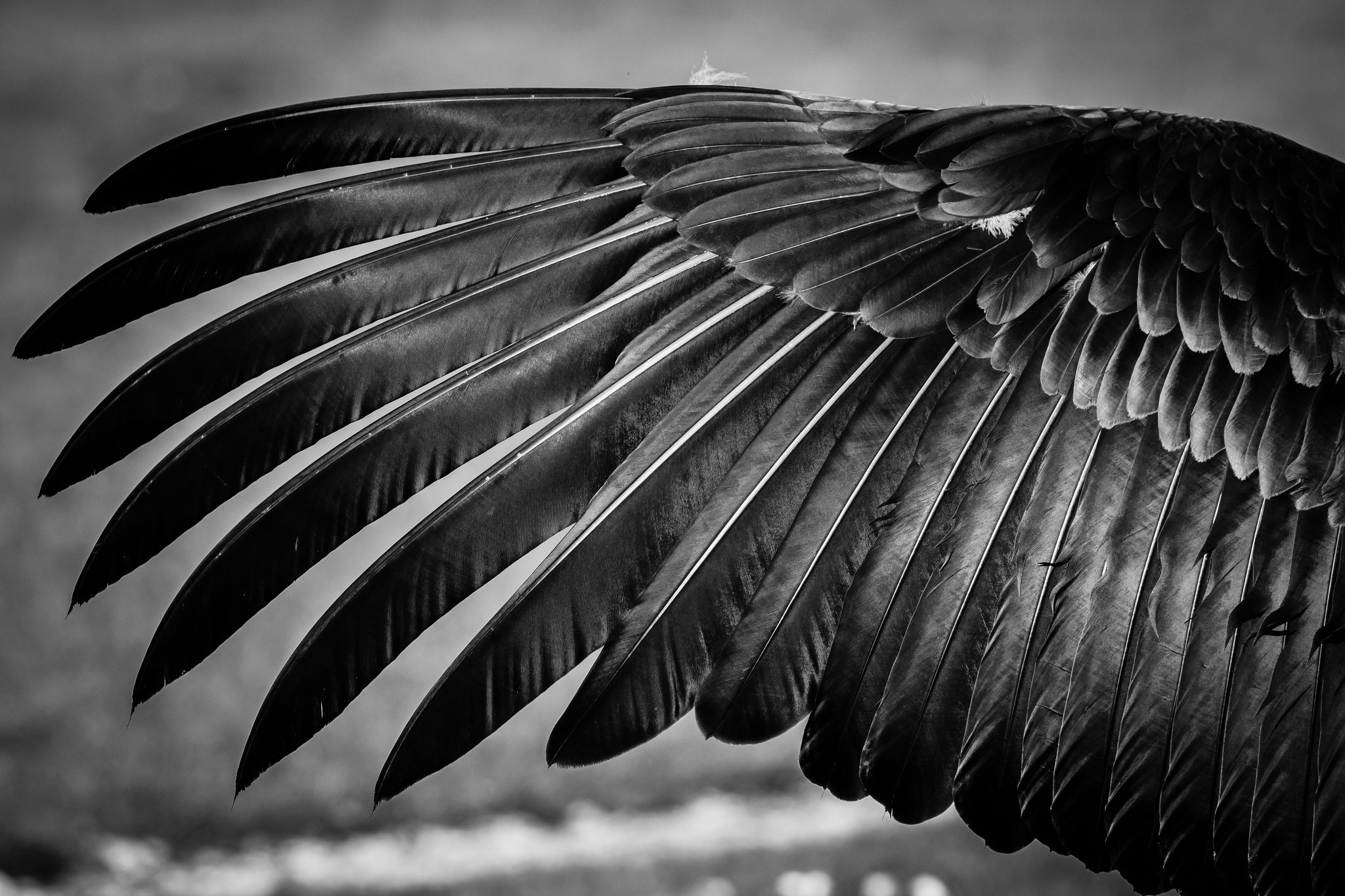 Feather Wings Hd Wallpaper Background Image 2048x1365