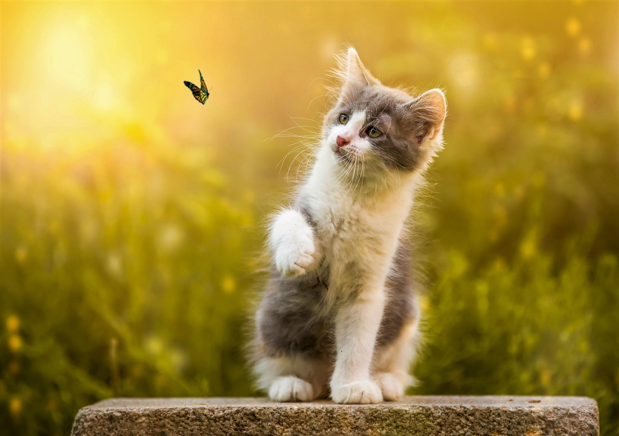 Best Wallpaper Cat Butterfly - 866842  2018_194758 .jpg