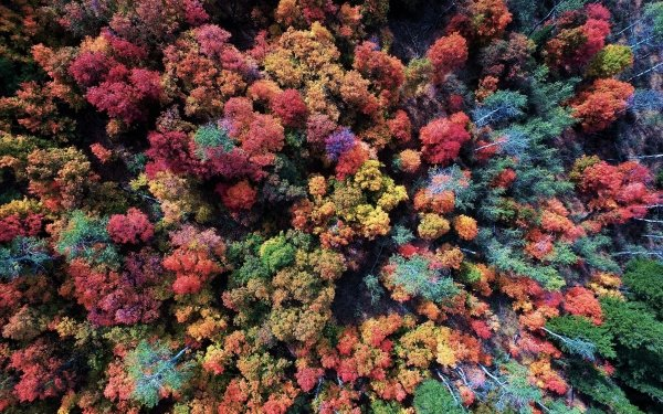 Earth Forest Colorful Fall Aerial Foliage HD Wallpaper   Background Image