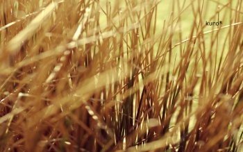 Earth - Grass Wallpapers and Backgrounds ID : 87103