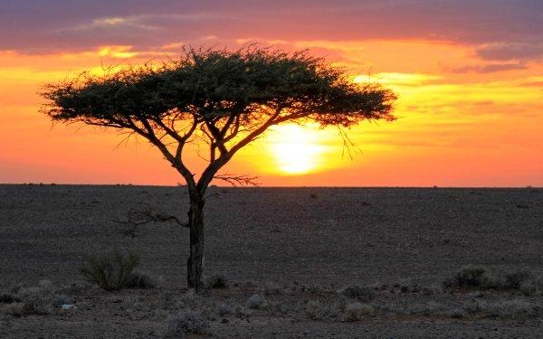 Earth Landscape Algeria Africa Tree Sunset Desert Sahara HD Wallpaper | Background Image