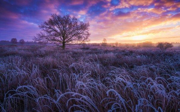 Earth Winter Frost Field Tree Sunset HD Wallpaper | Background Image