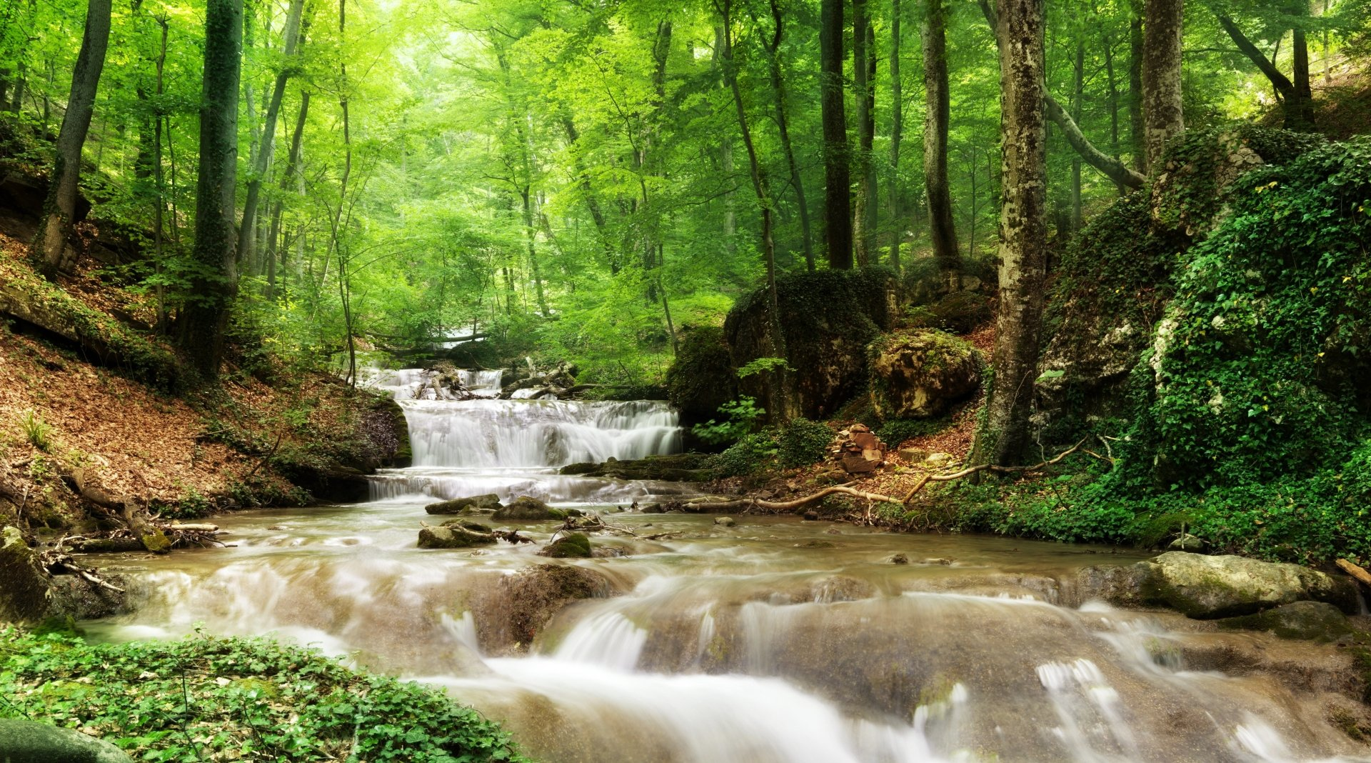 Earth - Stream  Nature Forest Greenery Rock Wallpaper