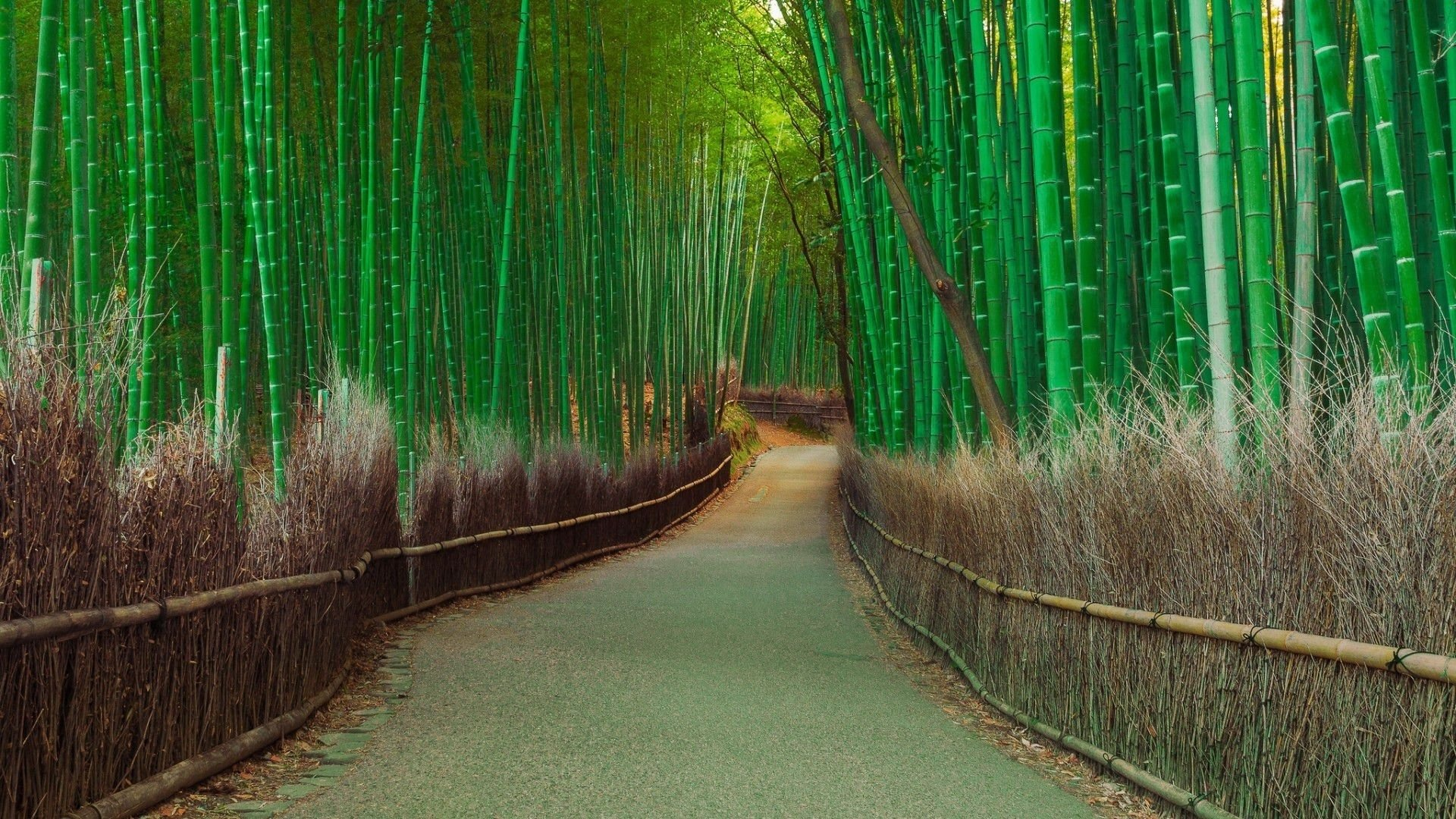 Earth - Bamboo  Path Nature Wallpaper