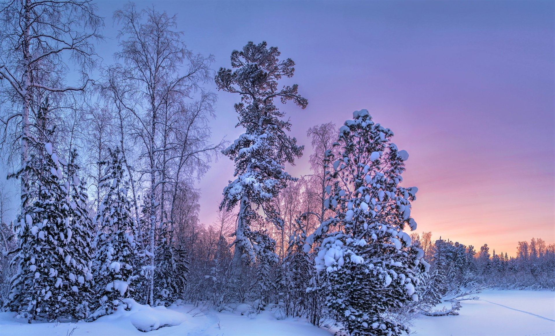 Earth - Winter  Earth Forest Snow Sky Sunset Wallpaper