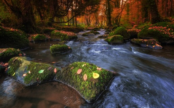 Earth Stream Nature Rock Forest Fall Moss HD Wallpaper | Background Image