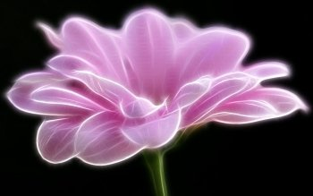 Artistisk - Flower Wallpapers and Backgrounds ID : 88993