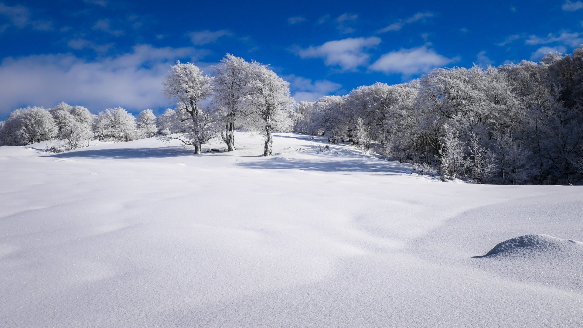 Earth - Winter  Nature Snow Tree Wallpaper
