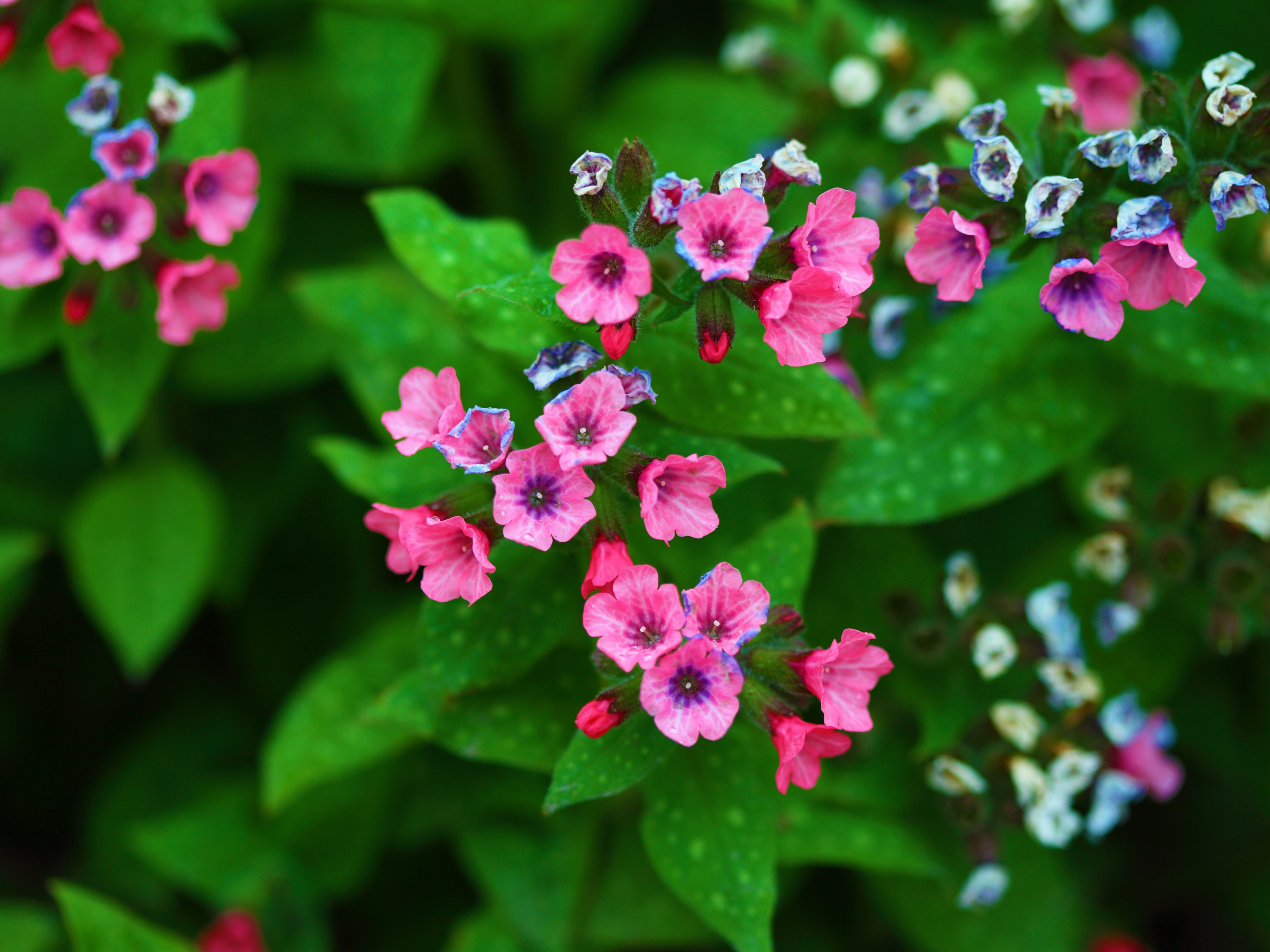 Tiny Pink And Blue Flowers 4k Ultra Hd Wallpaper Background