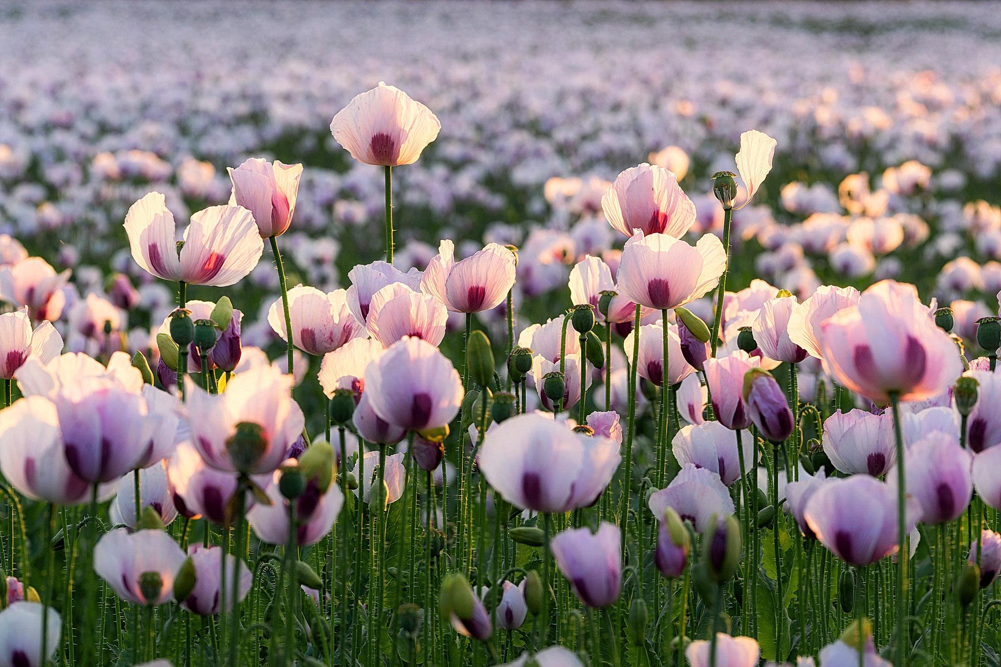 Fiori Wallpaper.Flower Hd Wallpaper Background Image 2048x1365 Id 902499