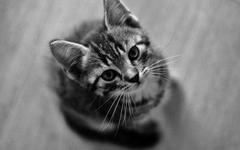 Animal - Cat Wallpapers and Backgrounds ID : 90703