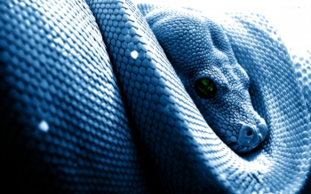 Animal - Snake Wallpapers and Backgrounds ID : 90751
